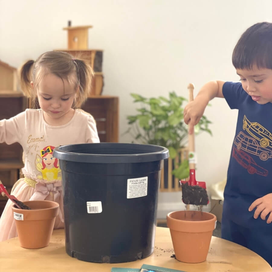 Grow your own plants with Sow 'N Sow