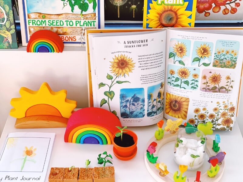 A learning display featuring Grimm's wooden toys and a selection of nature books