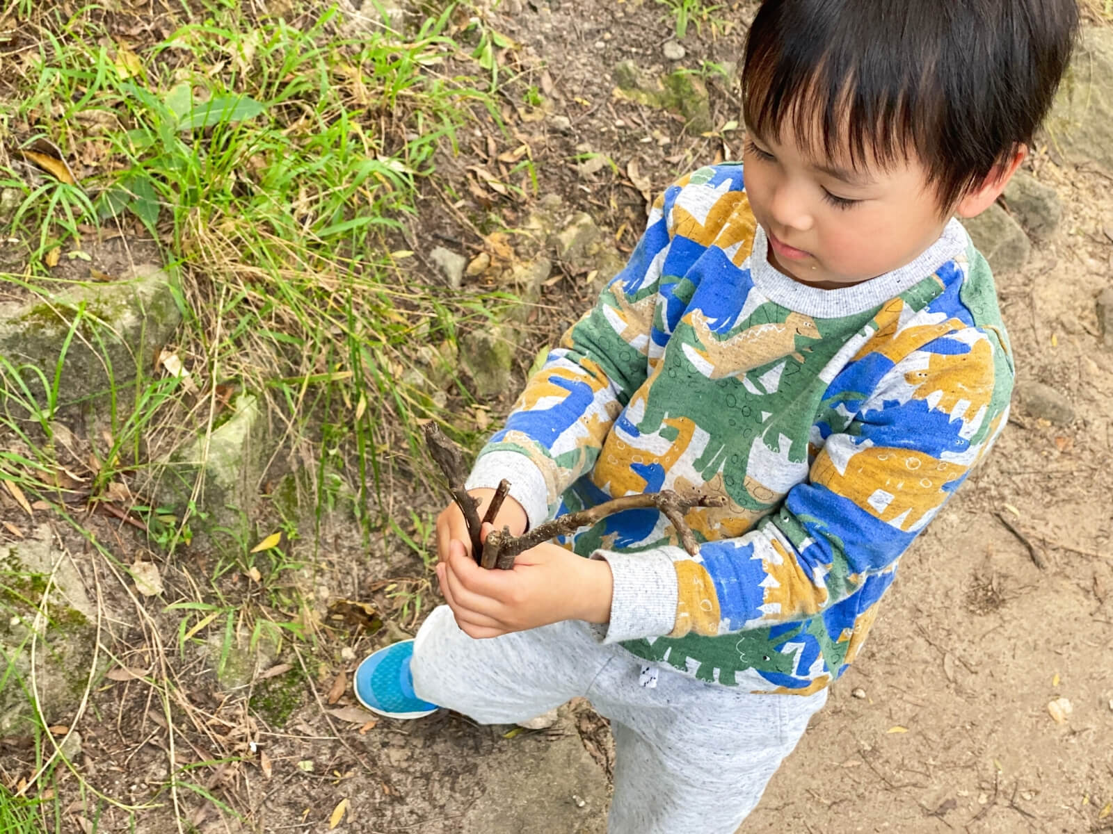 collect sticks and natural resources