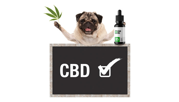 Does Cbd Show In Drug Tests? Here's What You Need To Know | CBD Asylum