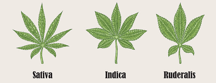 Sativa Indica and Ruderalis