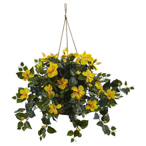 http://www.ebay.com/i/Yellow-Hibiscus-Hanging-Basket-Yellow-/282039756900