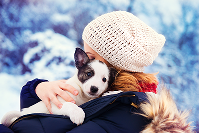 Tips and recommendations for house breaking your puppy in the winter