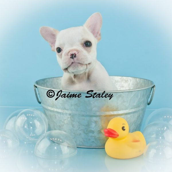 That Doggy in the Window | Ohio Puppies for Sale | That