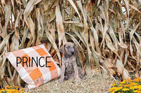 Prince Male AKC Great Dane $1250