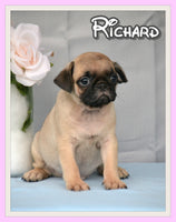 Richard Male Pug $1300