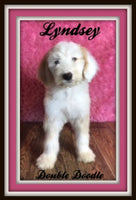 Lyndesy Female Double Doodle $750