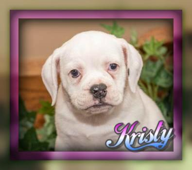 Kristy female Beabull Puppy (Full Price 699.00) Deposit