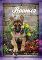 Boomer: Male ICA German Shepherd (Full Price $650.00) Deposit