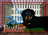Buster Male Rottweiler (Full Price $700.00) Deposit