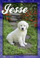 Jesse: Male AKC English Cream Golden Retriever (Full Price $1050.00) Deposit