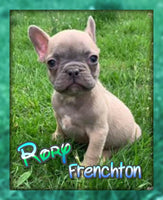 Rory Male Frenchton $1800