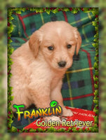 Franklin: Male AKC Golden Retriever (Full Price $600.00) Deposit