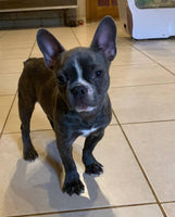 Vince Male Frenchton $1400