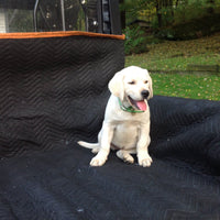 Labrador Retriever AKC Puppies for sale