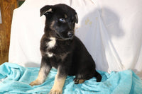 Puppies for Sale in Ohio