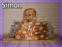 Simon Male Mini Labradoodle $1850