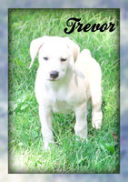 Trevor: Male Mountain Cur Puppy (Full Price $325) Deposit