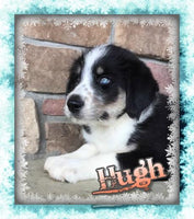 Hugh Male Huskipoo (Full Price $699) Deposit
