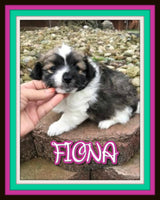 Fiona Female Pomachon $875