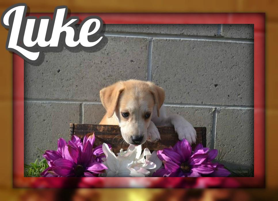 Luke Male Mountain Cur Mix $250