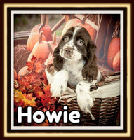 Howie Male ACA Cocker Spaniel $1800