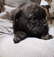 male puppies for sale near me