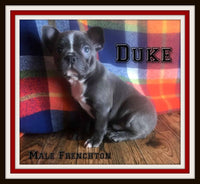 Duke Male Frenchton $1999