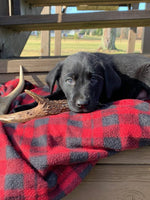 Ruger Male Labrador Retriever $550