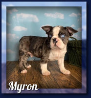 Myron Male Frenchton $2199