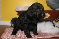 cute puppies for sale near me