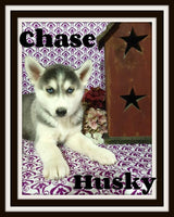 Chase Male Siberian Husky $475