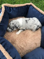 puppies for sale akron canton cleveland columbus
