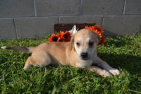 Willy Male Mountain Cur Mix $250