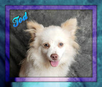 Tod Male Pomeranian (Full Price $275.00) Deposit