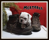 Meatball Male English Puggle $1950