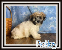 Pickles Male Teddy Bear $1500