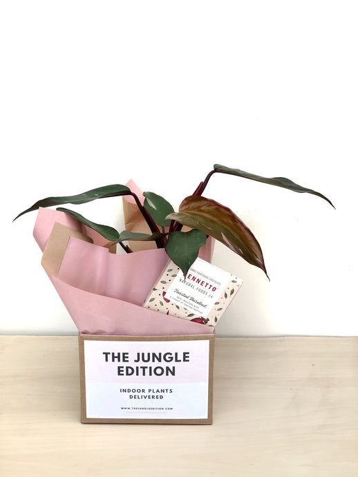 Philodendron Pink Princess in Speckled Pot + Bennetto Chocolate Bar $50.00
