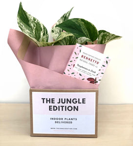 Marble Queen In Geometric Grey Pot + Bennetto Chocolate Bar $55.00