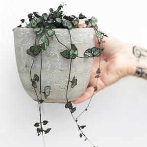 Chain Of Hearts in Concrete Pot