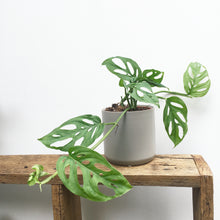 [Best Indoor Plants Melbourne] - The Jungle Edition