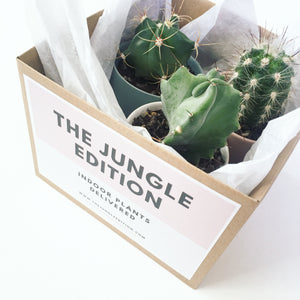 Cacti In Box | Indoor Plants Melbourne | The Jungle Edition