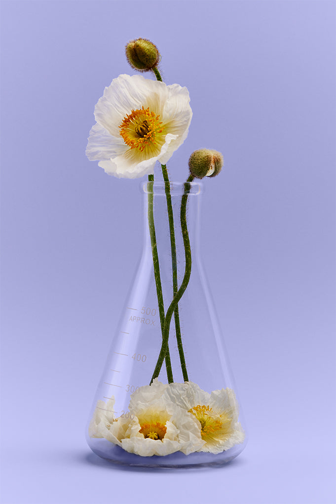 Poppies in a Beaker