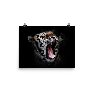 Daddy Kitty Yawn Matte Poster