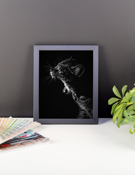 Kitty Yawn Framed Photo Paper Poster
