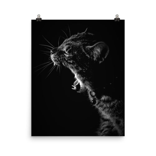 Kitty Yawn Photo Paper Poster