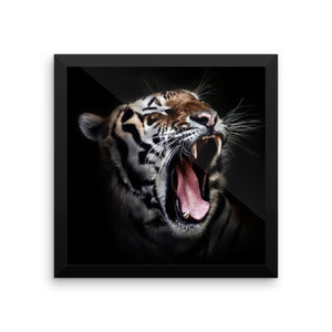 Daddy Kitty Yawn Framed Poster