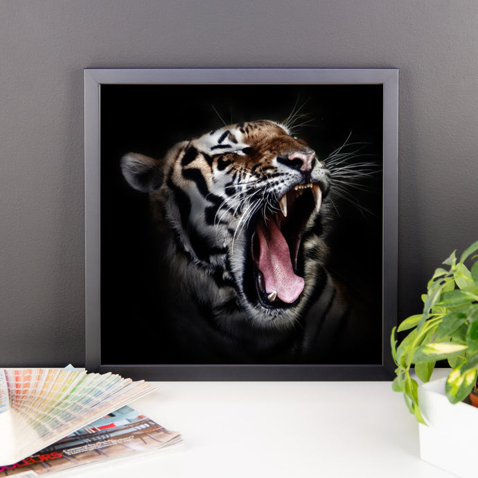 Daddy Kitty Yawn Framed Photo Paper Poster