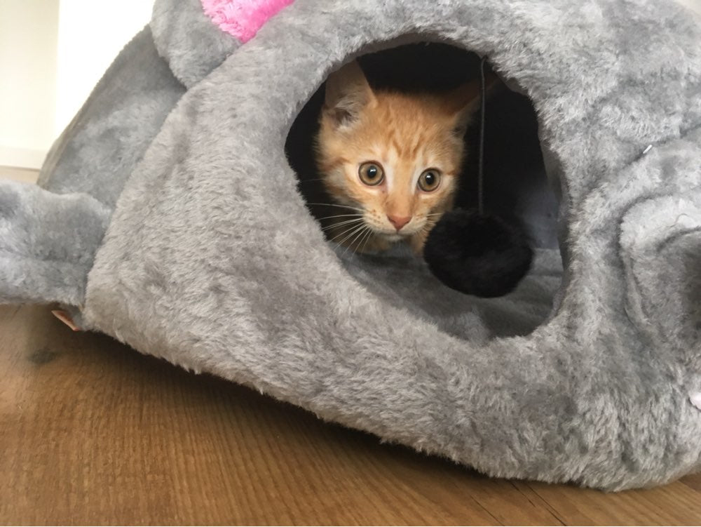 House In The Mouse - Waterproof Cat Cave House In The Mouse - Waterproof Cat Cave Cat House The Purr House The Purr House- The Purr House
