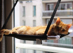 Classy Cat Window Hammock 2.0 Classy Cat Window Hammock 2.0 Cat Beds & Mats Professors pets Store The Purr House- The Purr House